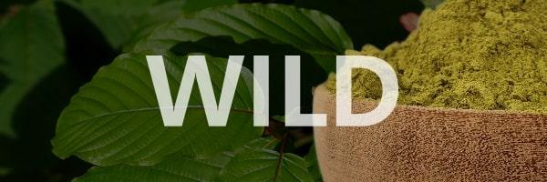 Wild Kratom